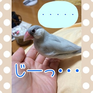 IMG_1638.JPG